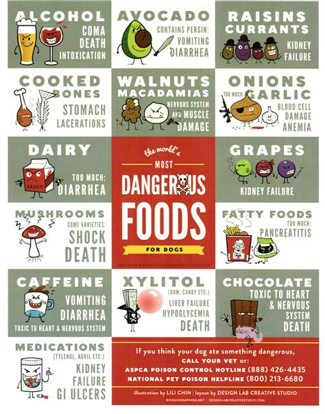 safe foods for dogs are treats really safe fidose of reality