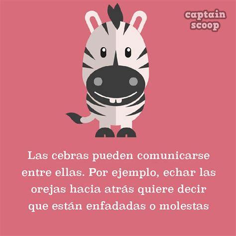 Pink Zebra Bedroom Ideas ilustraciones con incre 237 bles datos de animales que no sab 237 as