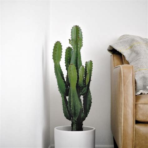 25 best ideas about indoor cactus on pinterest cactus indoor cactus plants and cactus plants