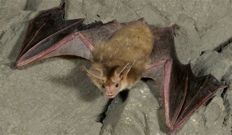 spooky science bat trivia fun and fascinating facts about