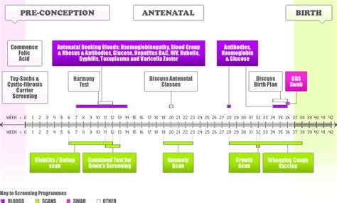 pregnancy timeline obstetrics is the surgical specialty dealing with the care of and their children