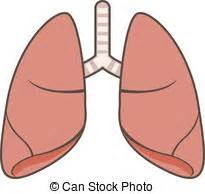 clipart lungs lungs clipart clipart suggest
