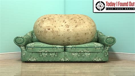 couch potato mean the lazy origins of the phrase couch potato