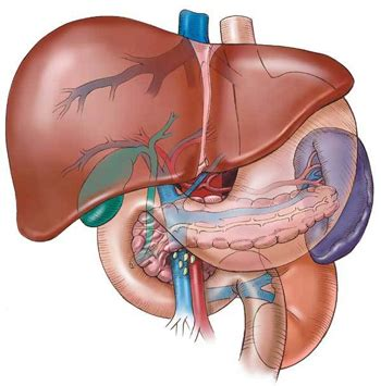supplement kidney damage liver disease symptoms and herbal supplements for liver