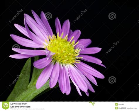 Small Purple by Small Purple Flower Royalty Free Stock Image Image 946196