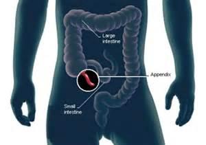 Location Of Appendix In Body » Home Design 2017