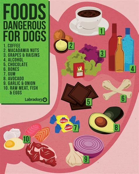dangerous foods for dogs foods dangerous for dogs dogs s best friend