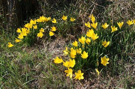 Narcissus Toska toskana rund um den monte amiata teil 1 orciatal und