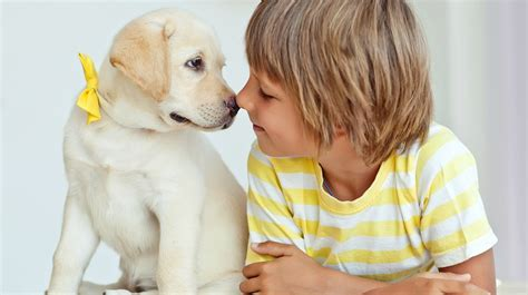 best puppy for toddler best pets for breeds picture