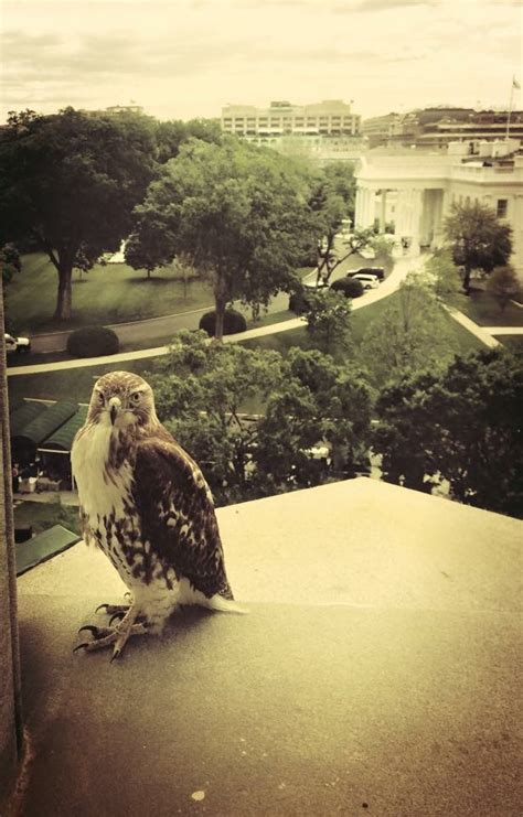 white house grounds the white house grounds have a new feathered visitor whitehouse gov
