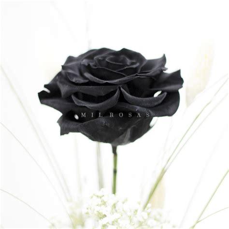 imagenes en puro negro rosa individual negro puro xxl milrosas