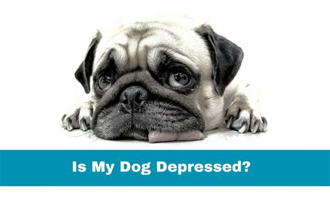 signs of depression in dogs how to get a depressed happy howsto co