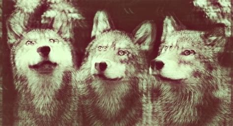 imagenes hipster animales imagenes hipster tumblr animales imagui