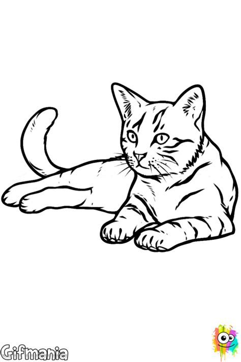 Realistic Cat Coloring Page Realistic Cat Coloring Pages