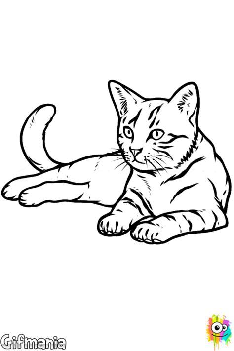 dibujos realistas para colorear dibujo de gato realista para colorear