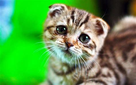 alimentazione per dissenteria diarrea nel gatto rimedi cause e cura gatto con