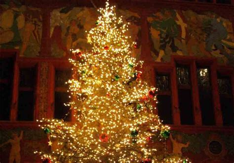 deck the holiday s christmas tree shopping tips