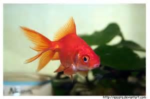 le poisson le petit poisson by escara on deviantart