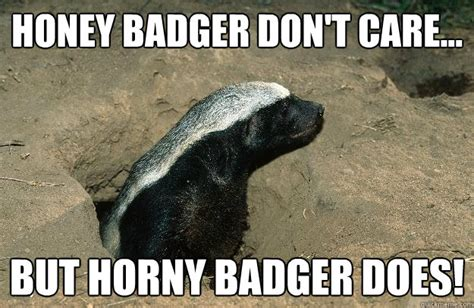 Meme Honey Badger - og honey badger memes quickmeme