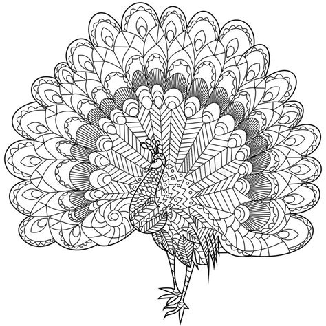 z coloring book for and adults 40 illustrations books peacock coloring vector for adults stock vector image