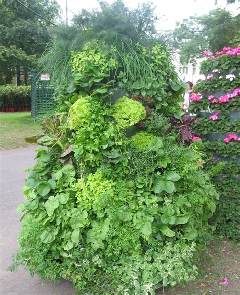 Vertical Garden Melbourne Vertical Garden And Greenwall Projects Now