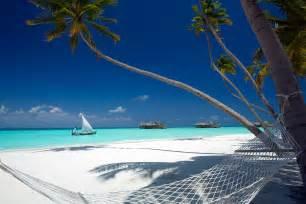 Palm Tree Wall Mural maldives luxury resort gili lankanfushi maldives