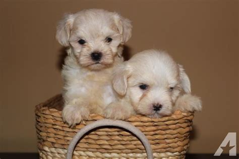puppies for sale in mobile al dogs and puppies for sale or adoption in mobile alabama