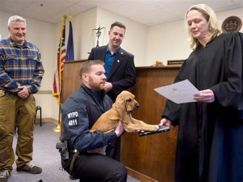 York Pa Arrest Records Adorable Bloodhound Becomes Newest Member Of Pa Department