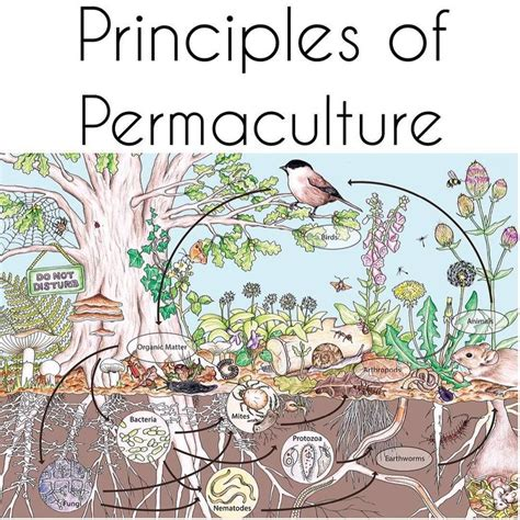 patterns in nature permaculture 140 best images about permaculture on pinterest geoff