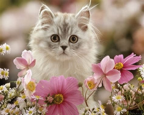 abdulmuin kucing  cute  gambar