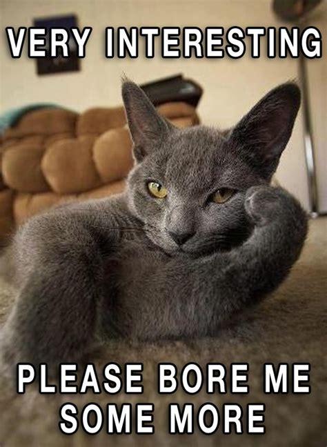 Random Cat Meme - funny pictures 16 strange random weirdos team jimmy joe