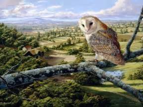 white owl wallpaper hd wallpapers pictures images backgrounds