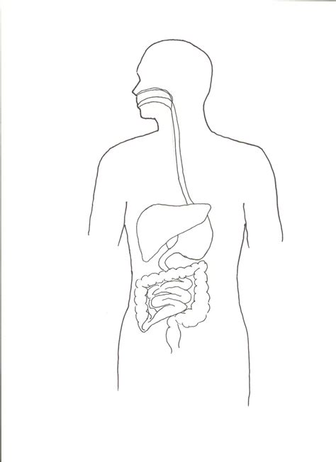 System Of A Black the digestive system diagram in black and white human
