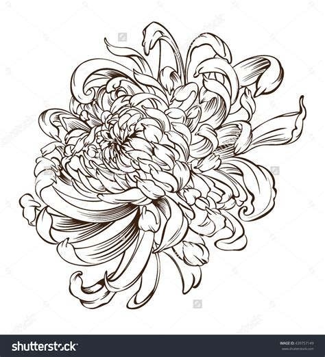 chrysanthemum tattoo design japanese flower chrysanthemum flower blossoms