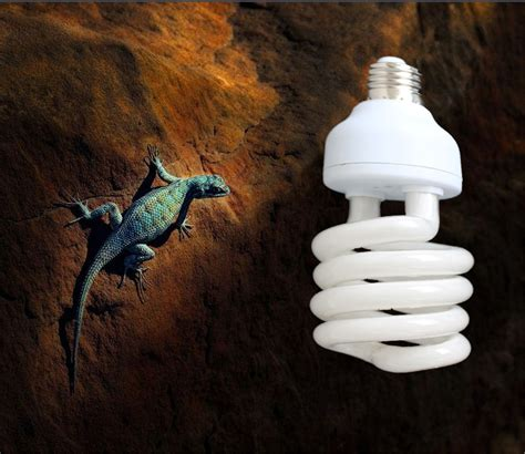 uv light fixtures reptile っ1pcs lot reptile compact fluorescent ᗐ vivarium vivarium