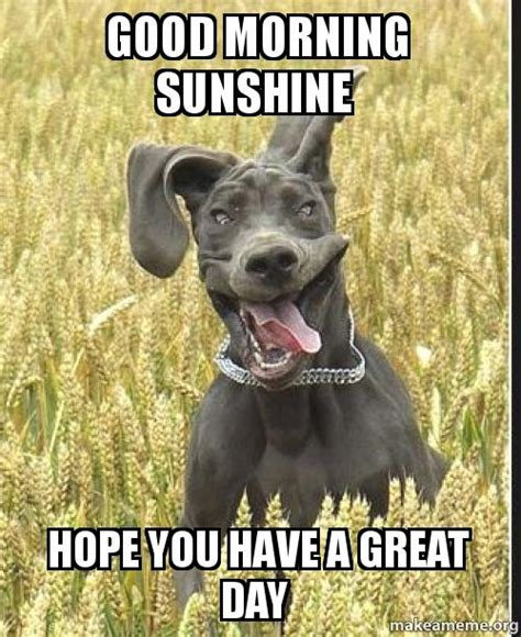 Have A Good Day Meme - good day meme funny pictures to pin on pinterest pinsdaddy