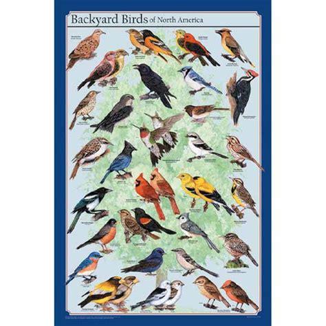 backyard birds photos feenixx poster quot backyard birds of north america quot wissenladen de