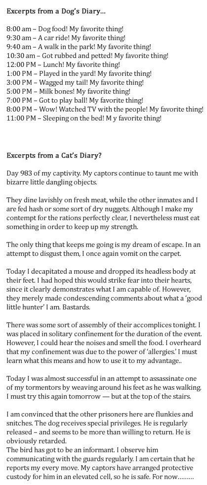 cat vs diary vs cat diary