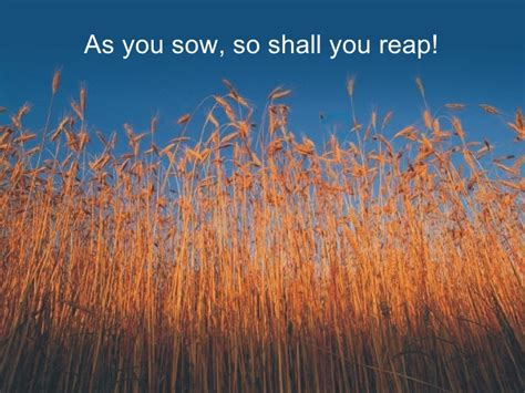 You Reap What You Sow Essay by Essays On As You Sow So Shall You Reap