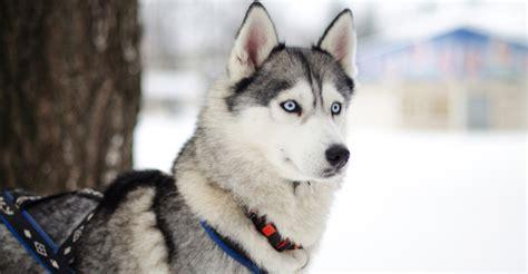 cutest dog breeds petfinder