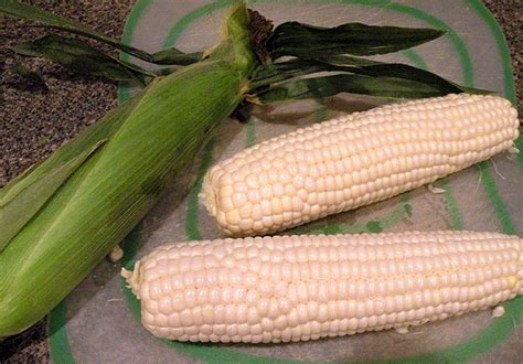 ate corn cob how do you eat corn on the cob around or