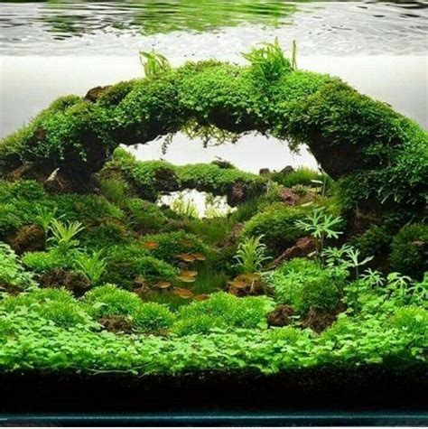 aquascape plants for sale 405 best aquarium iwagami style aquaticape aquascape
