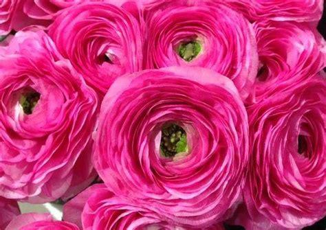 5 fiori perfetti per un i 7 fiori perfetti per un matrimonio in rosa lombarda flor