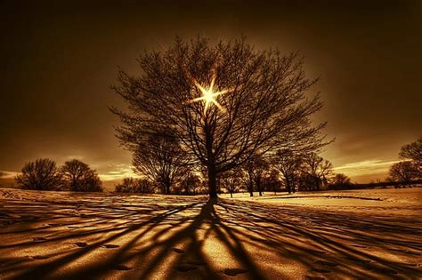 light a tree 80 most beautiful tree pictures from around the world