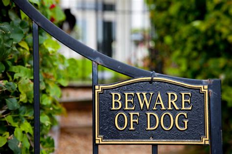 beware the dog house diy home automation pictures options tips ideas hgtv