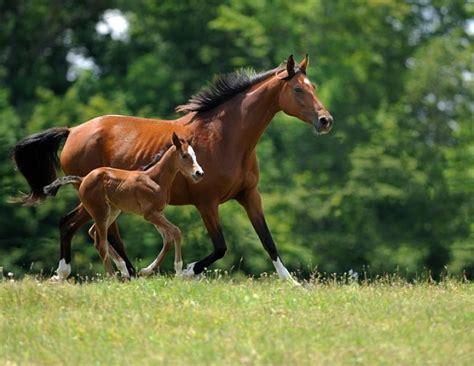 breeding horses mares stallion breeding your mare horse journals