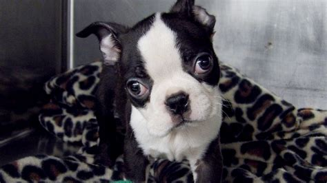 puppy sparks truck of puppies crashes sparks amazing rescue mission today