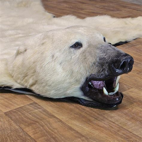 polar rug for sale rugs brown rugs grizzly rugs brown taxidermy pine grove pa bobcat rug wi