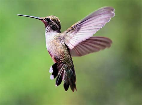 colorado hummingbirds pentaxforums com