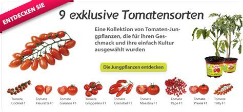 Wie Pflanze Ich Tomaten 4086 by Tomaten Pflanzen